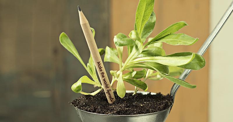Lápis que virá planta | Ideias Sustentáveis